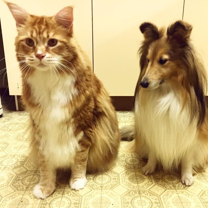 γάτος γατάκι