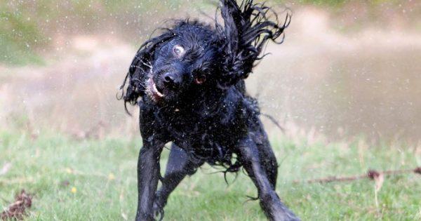Ένας φωτογράφος κατέγραψε με τον φακό του τις αστείες εκφράσεις των σκύλων την ώρα που τρέχουν