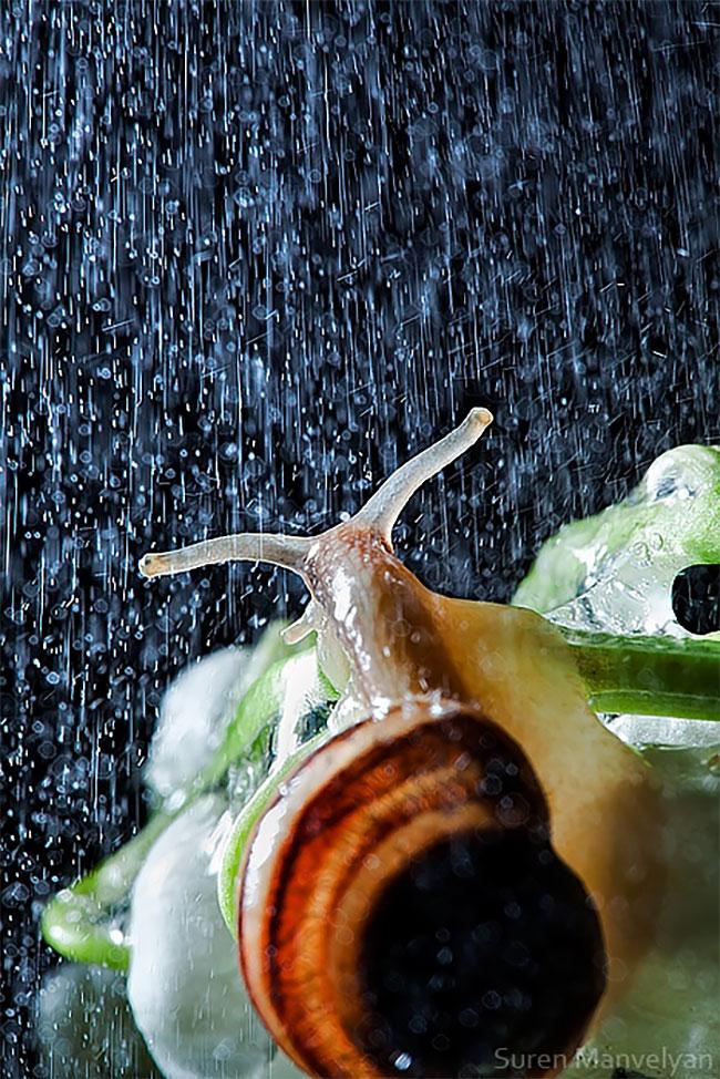 φωτογραφίες σαλιγκαριών σαλιγκάρια σαλιγκάρι Εντυπωσιακές κοντινές φωτογραφίες σαλιγκαριών μετά από βροχή