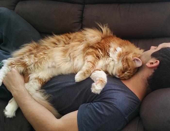 ο μεγαλύτερος γάτος στον κόσμο που μπήκε στο ρεκόρ γκίνες για το ΤΕΡΑΣΤΙΟ μέγεθός του! γάτος γάτες Γάτα Αυτός είναι ο Ομάρ