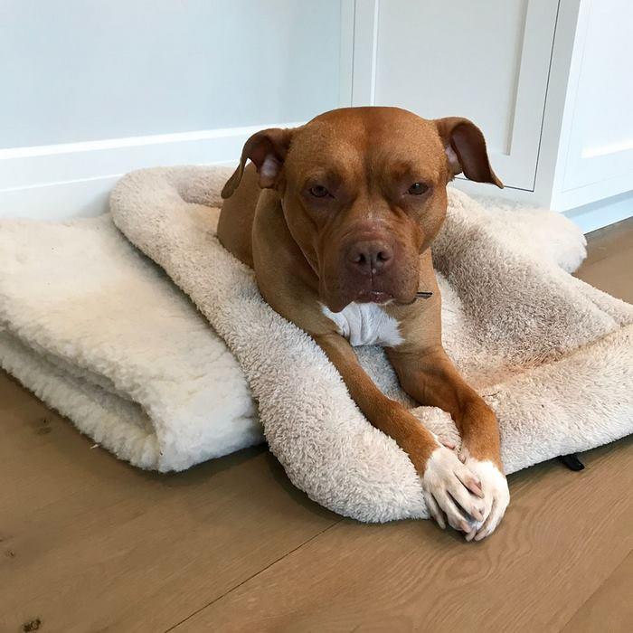 Σκύλος σκύλοι σκυλάκια σκυλάκι Αδέσποτος σκύλος που κοιμόταν για 8 χρόνια στο τσιμέντο αποκτά το κρεβάτι των ονείρων του Αδέσποτος σκύλος αδέσποτος Αδέσποτα