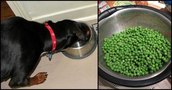 10 ανθρώπινες τροφές που κάνει να δίνετε και με το παραπάνω στον σκύλο σας