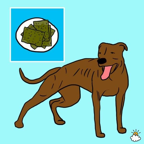 ανθρώπινες τροφές 10 ανθρώπινες τροφές που κάνει να δίνετε και με το παραπάνω στον σκύλο σας