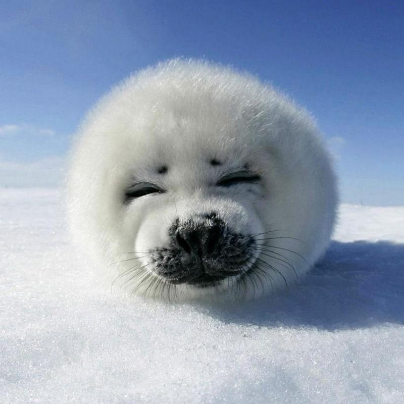 χαρούμενα ζωάκια χαρούμενα ζώα ζωάκια ζώα απλά δείτε αυτά τα 17 απίστευτα χαριτωμένα ζωάκια και θα σας φτιάξουν τη διάθεση! Αν είχατε μια άσχημη μέρα
