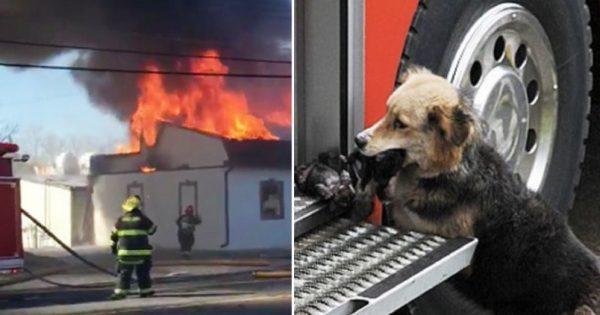Είδαν το σκυλί να βγαίνει απ'το φλεγόμενο σπίτι κρατώντας κάτι στο στόμα. Μόλις κατάλαβαν τι ήταν, δεν πίστευαν στα μάτια τους!
