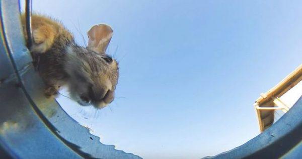 Άνδρας κρύβει κάμερα σε κουβά με νερό για να δει ποιός το πίνει και γίνεται viral