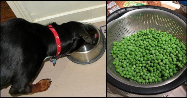 10 υγιεινά φαγητά τα οποία πρέπει να ταΐζετε και στον σκύλο σας αν θέλετε να έχει μια σωστή και ισορροπημένη διατροφή.