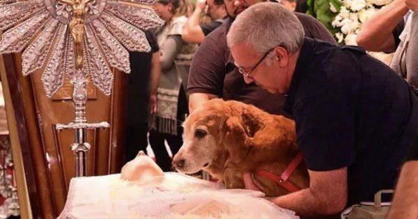 Το σκυλί έκλαιγε με λυγμούς πάνω από το φέρετρο του αφεντικού του. Όταν πήγαν να το σηκώσουν; Απλά προσέξτε το βλέμμα του…