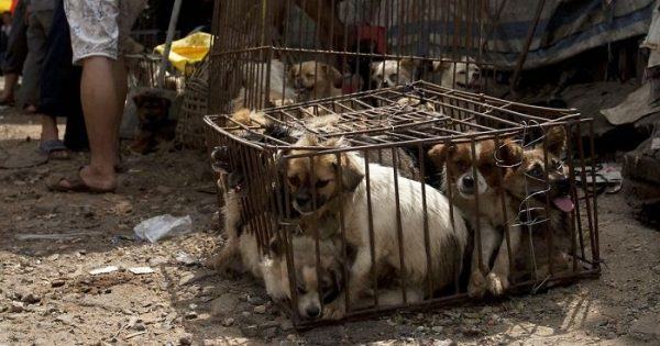 Η πώληση κρέατος σκύλου επιτέλους απαγορεύτηκε από το φεστιβάλ του Yulin στην Κίνα