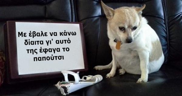 15 άτακτα σκυλάκια που τιμώρησαν τους ιδιοκτήτες τους με τον πιο ξεκαρδιστικό τρόπο!