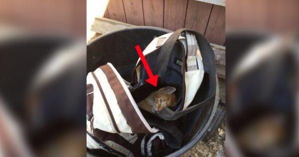 Είδε μια τσάντα στα σκουπίδια, όταν παρατήρησε ΚΑΤΙ να κουνιέται.. Μόλις, την ανοιξε, πάγωσε!