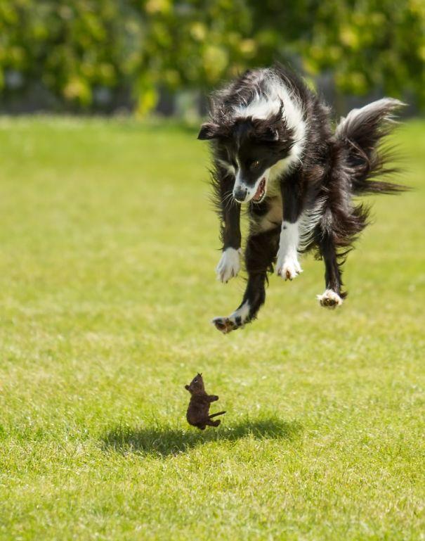 Σκύλοι που φοβούνται τα πιο αστεία πράγματα σκύλοι που φοβούνται σκύλοι