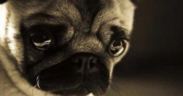 Γιατί κλαίει το σκυλί μου; Δείτε 10 λύσεις…