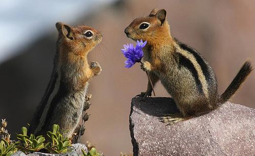 Θα σας κλέψουν την καρδιά: Ζώα… τρελά ερωτευμένα!