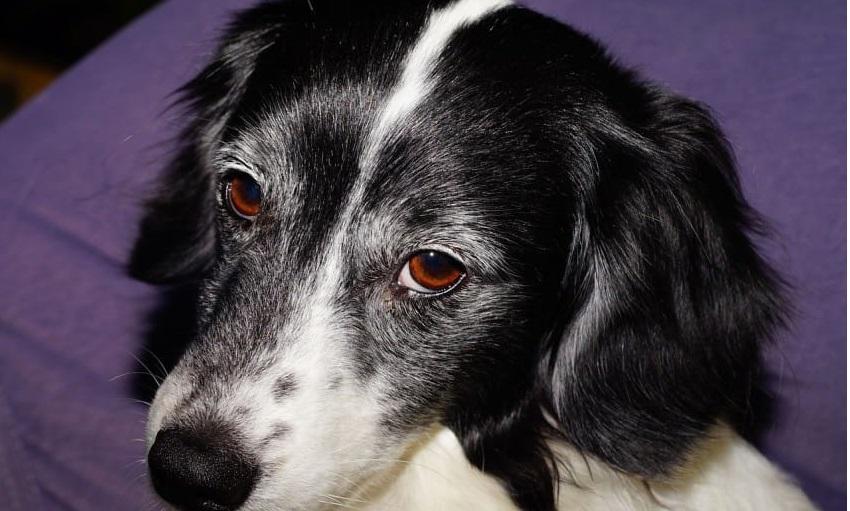 Τα σκυλιά μπορούν να «πουν» αν κάποιος είναι κακός άνθρωπος! Δείτε το Πως..