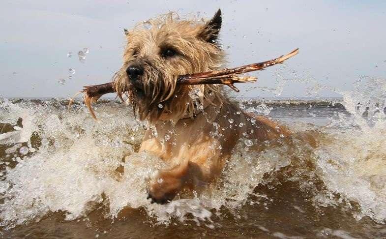 σκυλιά και παραλία σκυλιά παραλία