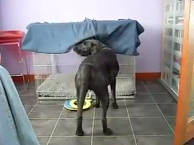 Σκύλος κρύωμα Βίντεο