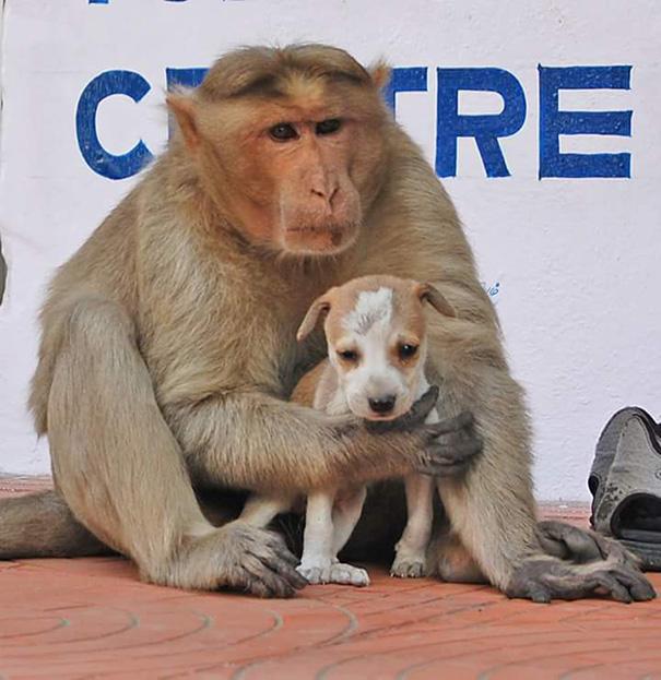 μαϊμού κουτάβι