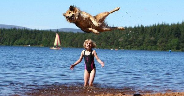 Ένας σκύλος για … τους ολυμπιακούς! Μπορεί και κάνει άλματα που φτάνουν σε ύψος τα δύο μέτρα!