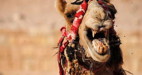 9 ζώα με τρομακτικά δόντια!