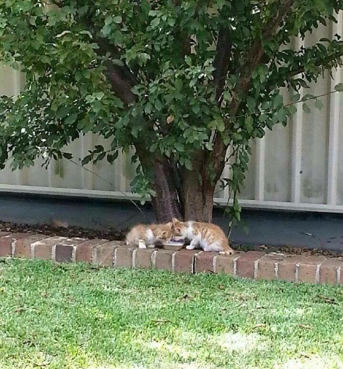 τυφλά δίδυμα Δείτε ποσό αγαπημένα είναι αυτά τα δίδυμα τυφλά γατάκια γάτος γάτες γατάκια Γάτα