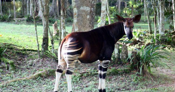 10 ζώα που πιθανώς δεν ξέρετε ότι υπάρχουν!