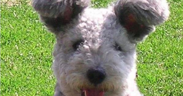 Αυτή είναι η νέα ράτσα σκύλων που ανακαλύφθηκε πρόσφατα! Δεν είναι αξιολάτρευτα;