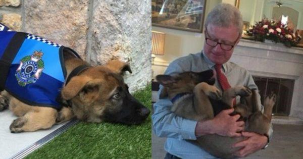 Αστυνομικός σκύλος έχασε την δουλειά του γιατί ήταν πολύ παιχνιδιάρης