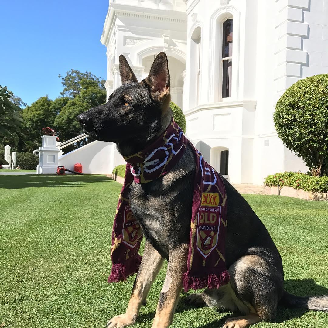 Σκύλος Αστυνομικός σκύλος έχασε την δουλειά του γιατί ήταν πολύ παιχνιδιάρης αστυνομικός σκύλος