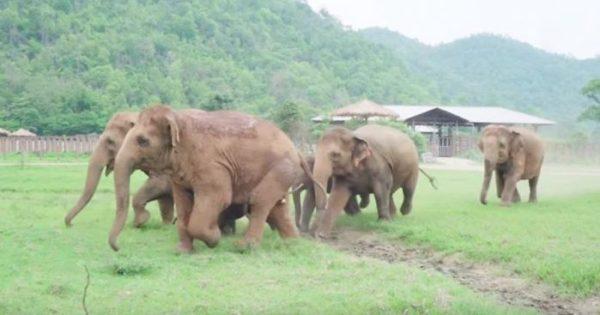 Ελέφαντες τρέχουν να καλωσορίσουν ένα μικρό ελεφαντάκι που μόλις διασώθηκε
