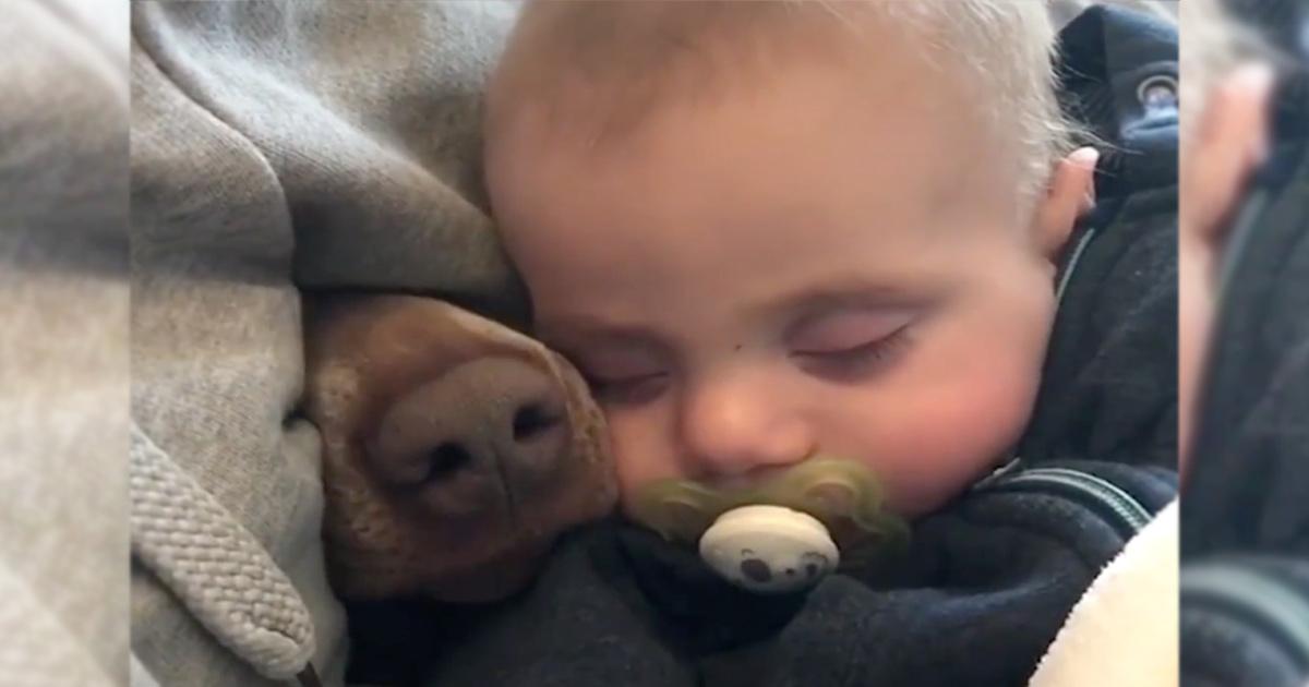 όταν μια μουσούδα ξεπροβάλει ξαφνικά μέσα απτην κουβέρτα! μουσούδα Η μαμά βιντεοσκοπεί το μωρό της που κοιμάται