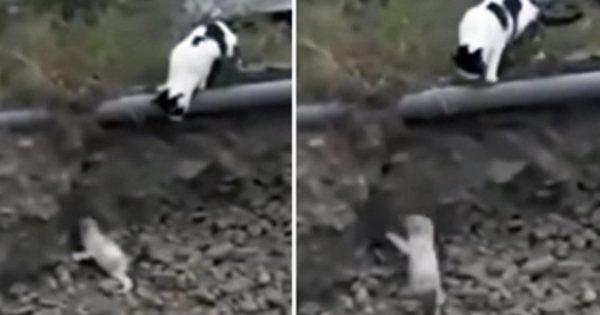 Η απίστευτη στιγμή που ατρόμητη γάτα σώζει παγιδευμένο σκυλάκι από βέβαιο θάνατο. Δείτε το συγκλονιστικό βίντεο!