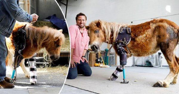 Αλογάκι με τρία πόδια παίρνει μια δεύτερη ευκαιρία στη ζωή χάρη σ΄αυτόν τον μεγαλόψυχο γιατρό