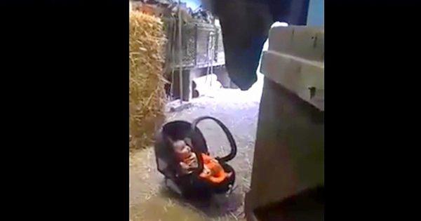 Μαμά αφήνει το μωρό της μπροστά σε ένα αλογο. Η αντίδρασή του; Απλά συγκλονιστική!