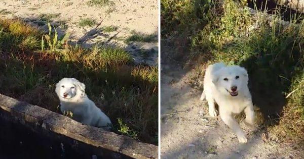 Κουτάβι βρέθηκε παρατημένο σε χωράφι. Απλά δείτε την αντίδρασή του όταν καταλαβαίνει ότι έχει επιτέλους παρέα!