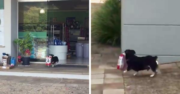 Αυτός ο πανέξυπνος σκύλος πηγαίνει μόνος του για ψώνια και αγοράζει ο ίδιος το φαγητό του!