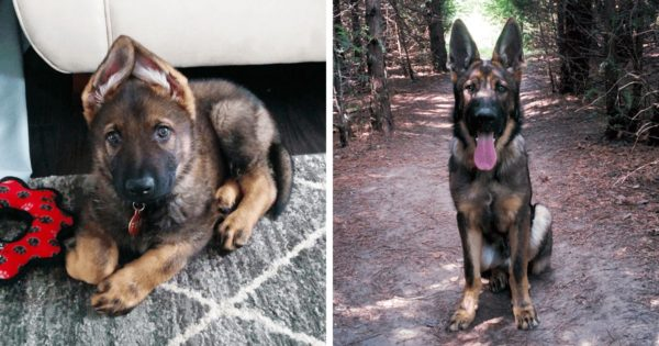 40 υπέροχες φωτογραφίες σκύλων πριν και αφού μεγάλωσαν