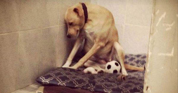Υιοθέτησαν ένα Λαμπραντόρ για να παίζει με τα μικρά παιδιά τους. Όταν όμως το σκυλί έκανε ΑΥΤΟ, όλοι στην οικογένεια πάγωσαν…