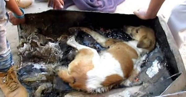 Είδαν τον σκύλο μέσα στο βαρέλι και προσπάθησαν να τον βγάλουν. Μόλις όμως κατάλαβαν ΤΙ του είχαν κάνει, έπαθαν ΣΟΚ…