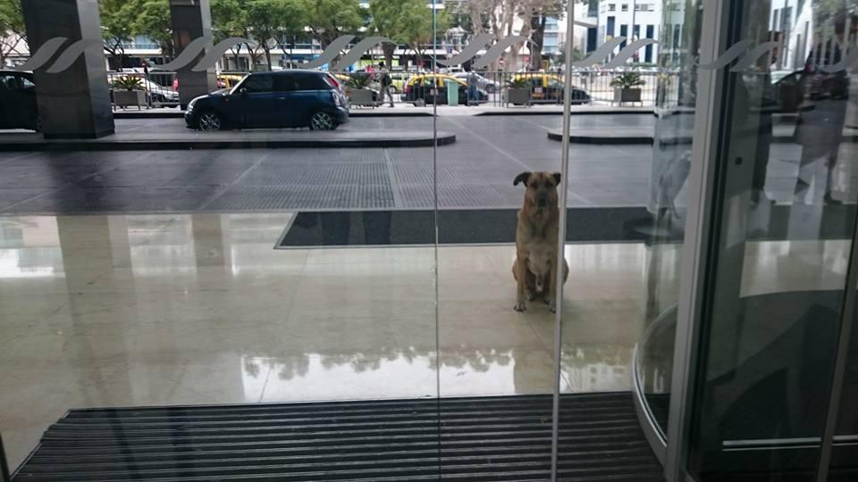 Σκύλος σκύλοι Αδέσποτος σκύλος