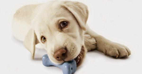 Φτιάξτε μόνοι σας παιχνίδια για τον σκύλο σας (βίντεο)