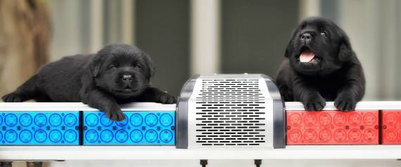 Αυτά τα νέα σκυλιά που μπήκαν στην ομάδα της αστυνομίας θα σας κάνουν να φωνάξετε «παραδίνομαι»