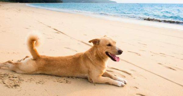 Είστε ιδιοκτήτης σκύλου; Δείτε τι πρέπει να προσέχετε το καλοκαίρι!