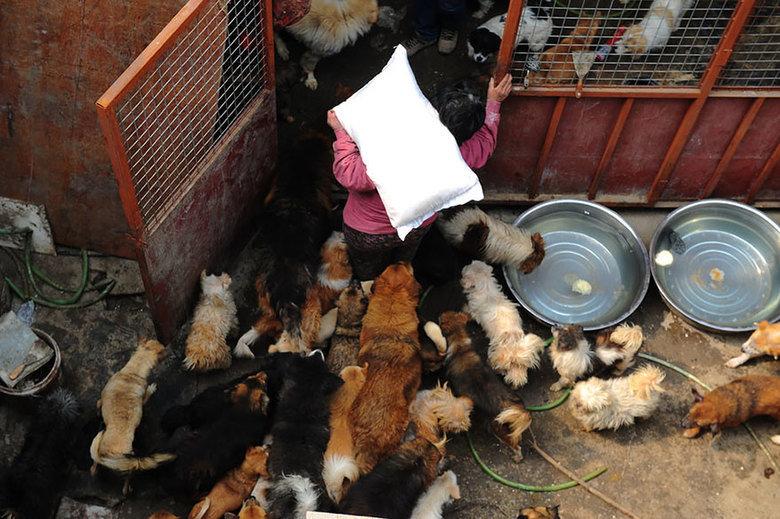 κακοποίηση σκύλων διάσωση σκύλων ακτιβιστές