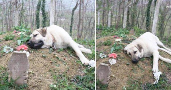 Αυτός ο σκύλος με τη ραγισμένη καρδιά φεύγει κάθε μέρα από το σπίτι για να επισκεφτεί τον τάφο του ιδιοκτήτη του