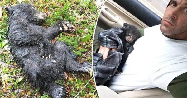 Πεζοπόρος σώζει πεινασμένη μαύρη αρκούδα κινδυνεύοντας να χάσει τη ζωή του ή να μπει φυλακή