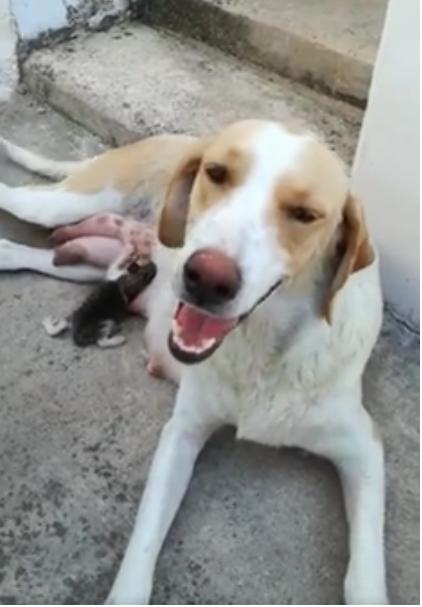 Σκύλος σκυλίτσα γατάκι Γάτα