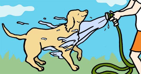 Θερμοπληξία σκύλων: Πως να την αναγνωρίσετε, να την αποτρέψετε και να την περιποιηθείτε