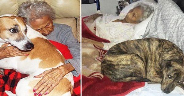 Ηλικιωμένη γυναίκα πεθαίνει και η τελευταία της επιθυμία είναι να βρεθούν σπίτια γεμάτα αγάπη για τα 6 σκυλιά που θα αφήσει πίσω της