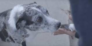 Σκύλος σκύλοι ηλικιωμένος σκύλος